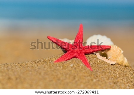 Aquatic. Shell and starfish on sandy beach - stock photo
