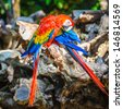 Ara, a Neotropical genus of macaws with eight extant species and at least two extinct species. - stock photo