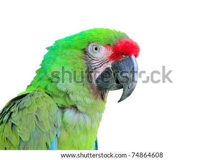 Ara Militaris Military Macaw Green parrot South and Central america [Photo Illustration] - stock photo