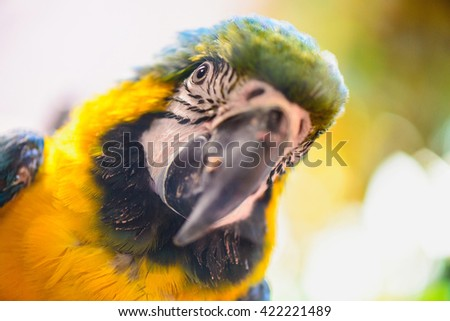 Ara parrot exotic tropical bird close-up portrait - stock photo