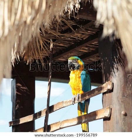 Ara parrot, yellow-blue.Macaw parrot. - stock photo