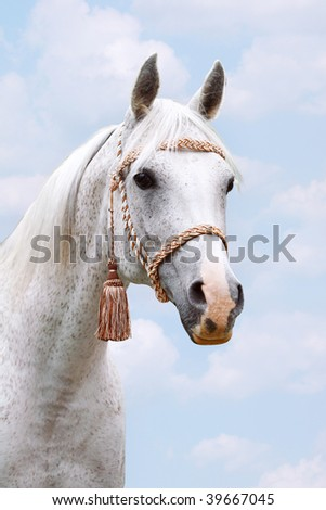 arab head on sky - stock photo