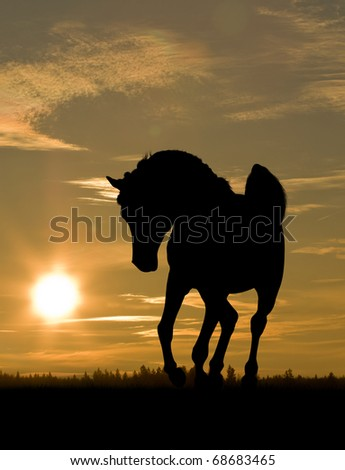 arab horse in sunset - stock photo