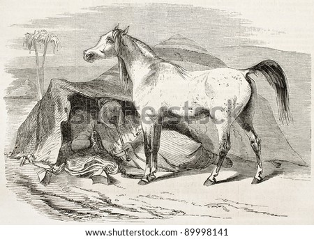 Arab horse old illustration. By unidentified author, published on L'Illustration, Journal Universel, Paris, 1858 - stock photo
