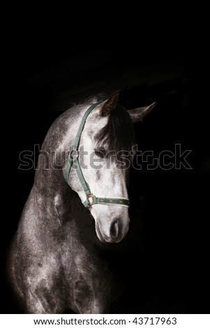 arab stallion on black - stock photo