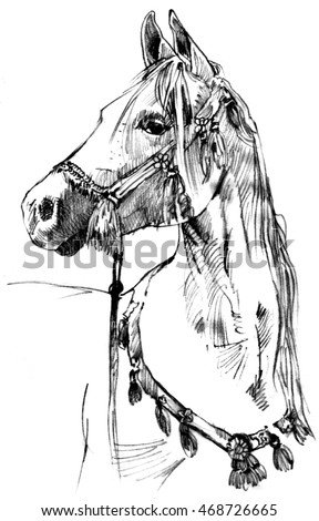 Horse Drawing Stock Images, Royalty-Free Images & Vectors ...