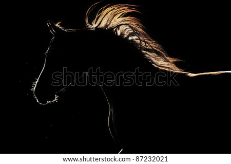 arabian horse silhouette on the dark background - stock photo