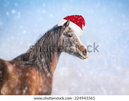 Arabian horse with Christmas Santa hat on blue winter snow background - stock photo
