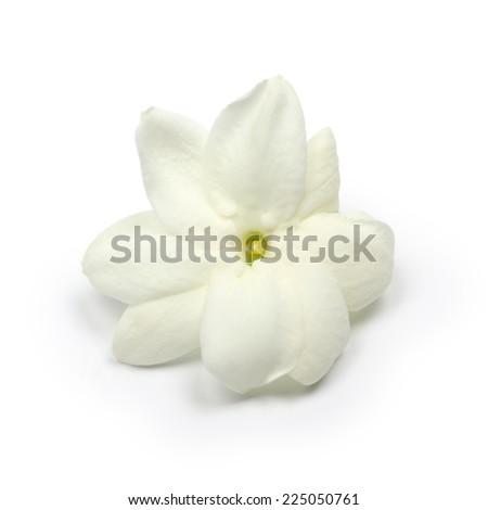 arabian jasmine,  jasmine tea flower, close up - stock photo