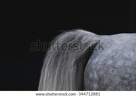 Arabian tail - stock photo