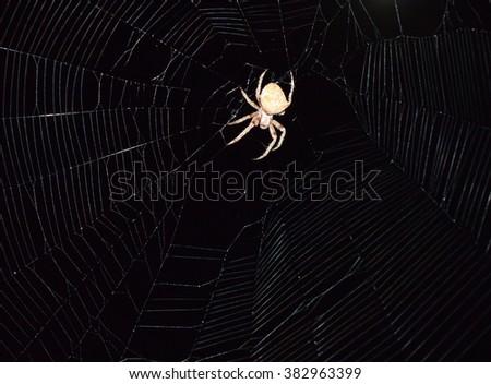 Araneus Spider hunts at night. Night spider on its web. - stock photo