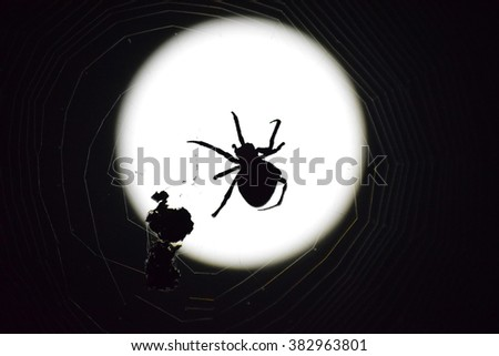 Araneus Spider on the background of the moon. Night spider on its web. - stock photo