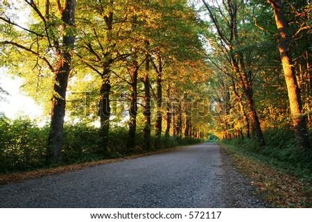 Arbor - stock photo