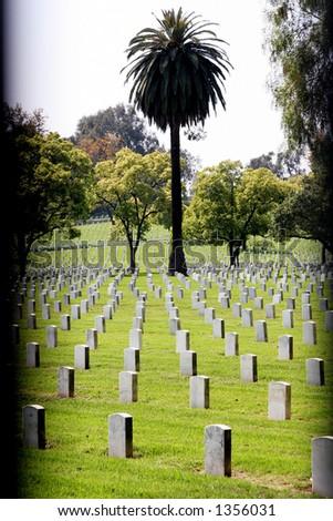 Arbre de cimetière et de paume. - stock photo