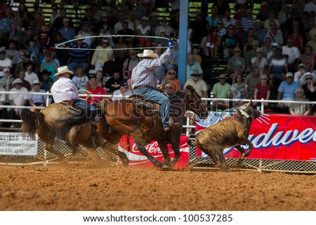 ARCADIA, FLORIDA - MARCH 9- Team cattle roping contests during the famous 84th All-Florida Championship Rodeo on March 9, 2012 in Arcadia, Florida - stock photo