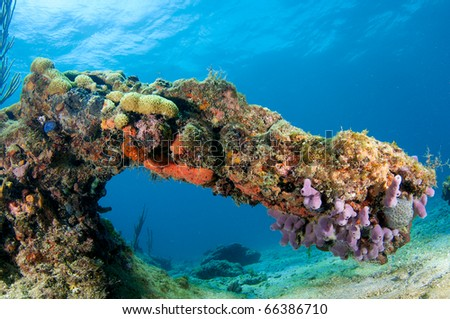Arch formed by coral on reef in south east Florida. - stock photo