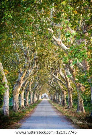 Arch shaped trees of sycamore, traditional of Provence, France - stock photo
