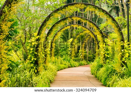 Arch way of yellow orchid from Singapore National Orchid Garden - stock photo