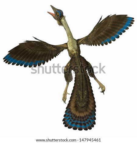 Archaeopteryx on White - Archaeopteryx is known as the earliest bird and was a bridge species between dinosaurs and modern birds. - stock photo