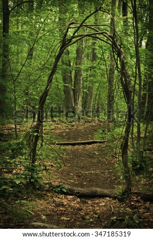 Archway made from trees and vines creates doorway along woodland path - stock photo