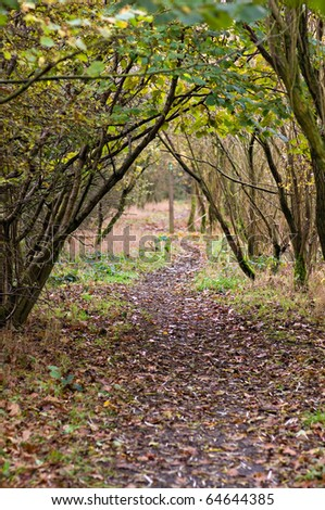 archway of trees on a woodland footpath with copy space at the bottom - stock photo