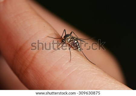 are blood-sucking mosquitoes - stock photo