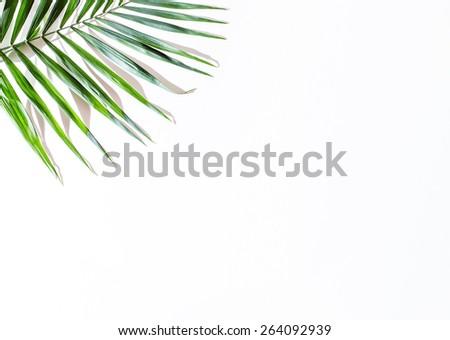 areca palm leaves - stock photo
