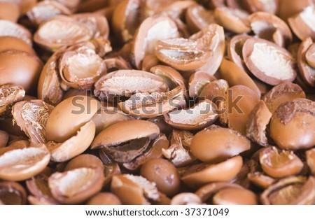 Argan nut shells - stock photo