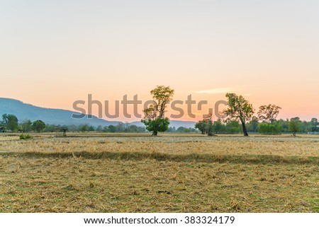 arid rice field after harvest with a trees and the sunset, twilight sky background. The sun behind a mountain  - stock photo