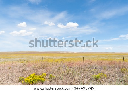 Arizona countryside on Route 66 field yellow rabbit brush flower blue sky with white puffy clouds blowing through.