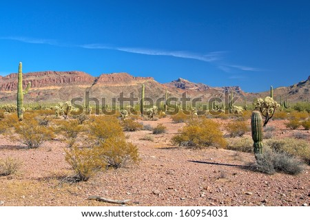 Arizona desert landscape - stock photo