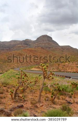 Arizona desert landscape,  Joshua trees. - stock photo
