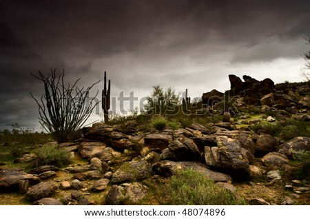 Arizona desert landscape with Saguaro cacti and Ocotillo shrub - stock photo