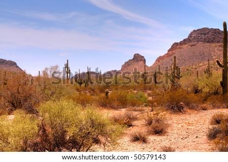 Arizona desert mountain in the spring - stock photo