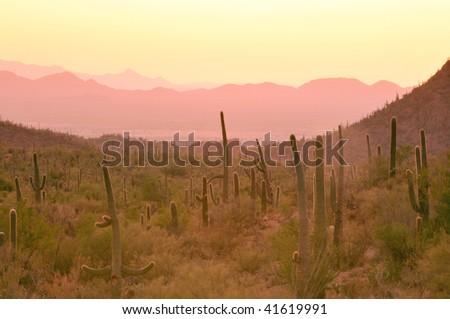 arizona desert valley sunset - stock photo