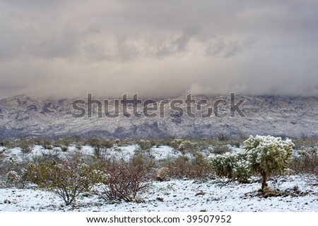 Arizona Desert with snow on cactus, mountains in the background and storm clouds