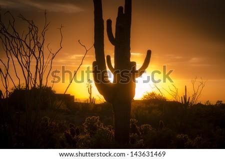 Arizona landscape, sunset saguaro in silhouette over desert. - stock photo