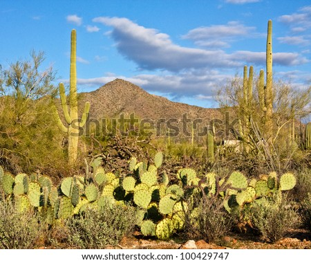 Arizona's Saguaro National Park
