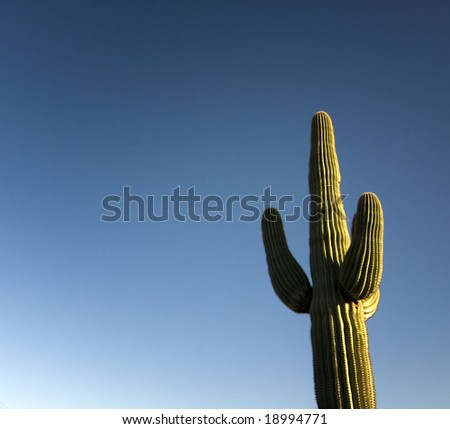 Arizona Saguaro Cactus with blue sky background