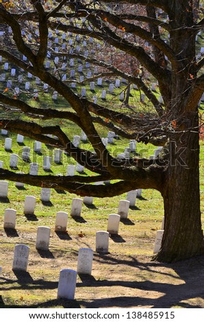 Arlington Cemetery with Grave Stones and Tree - stock photo