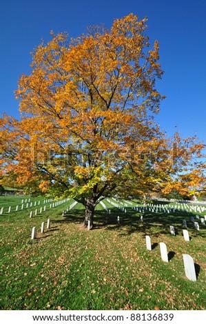 Arlington National Cemetery 2 - stock photo