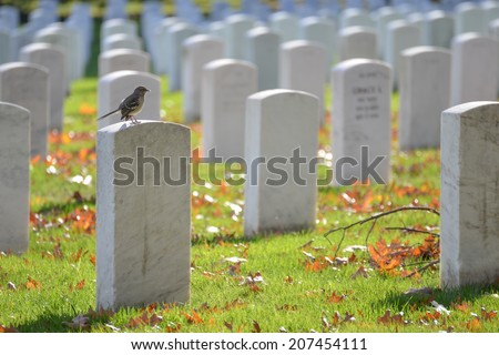 Arlington National Cemetery in Autumn - Washington D.C. United States - stock photo