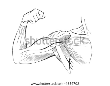 Arm muscles - stock photo