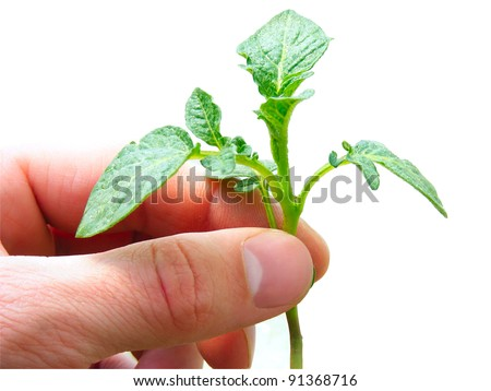Arm with green plant isolated on white. - stock photo