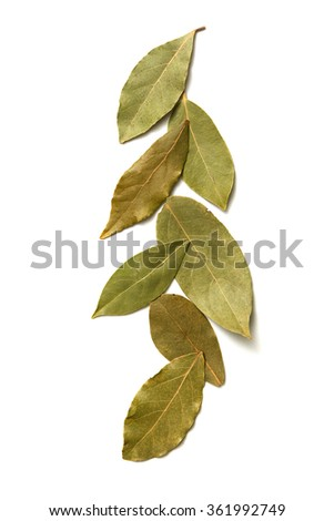 Aromatic bay leaves on white background - stock photo