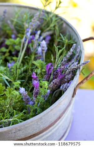 Aromatic herbs in galvanic pail. Also available in horizontal format. - stock photo