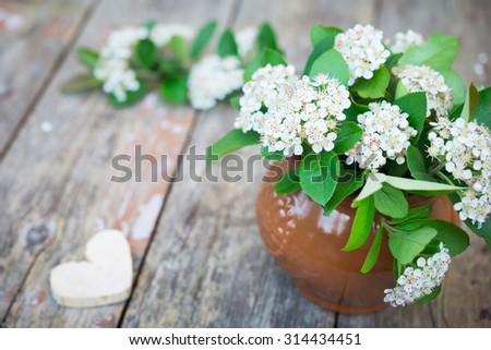 Aronia Flowers. Bunch of flowers chokeberry. Vintage floral background.
