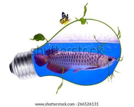 Arowana fish inside the light bulb - stock photo