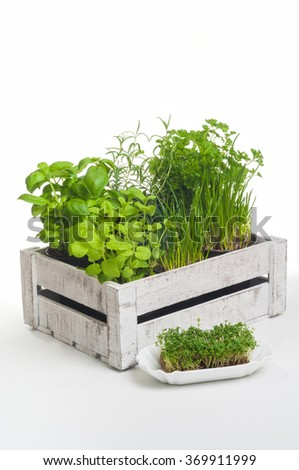 Arrangement of popular culinary herbs in wooden crate on white background; Small spice garden for the kitchen - stock photo