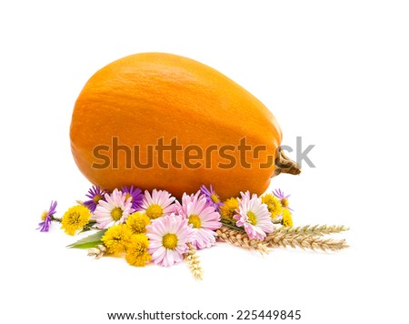 Arrangement of thanksgiving. Pumpkin, chrysanthemums, wild aster and spikes on white background - stock photo